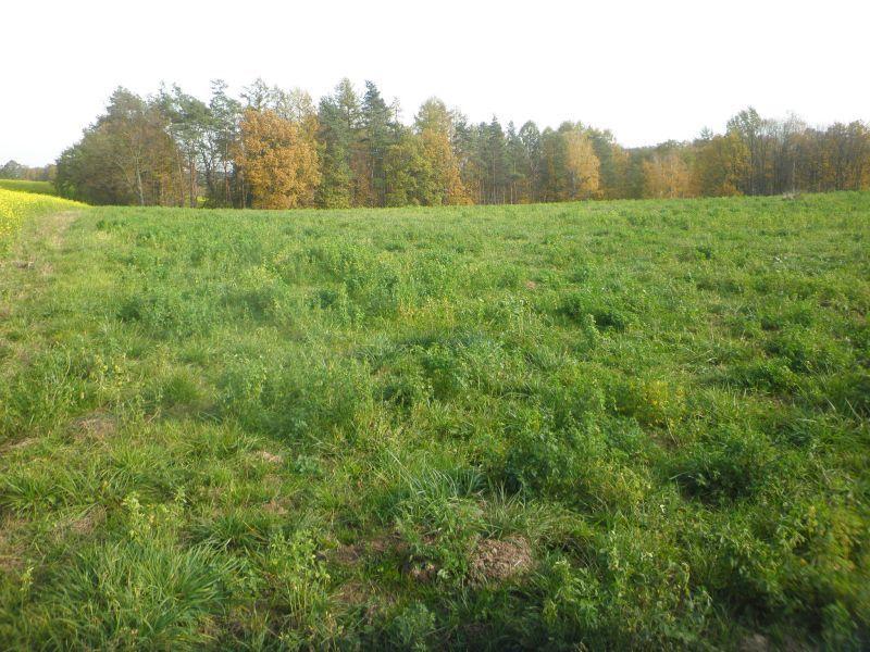 Pozemek pro bydlení na prodej, Markvartovice